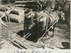 Horses working at Tuscor MT 1925