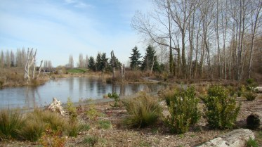 Warren Magnuson Park wetlands